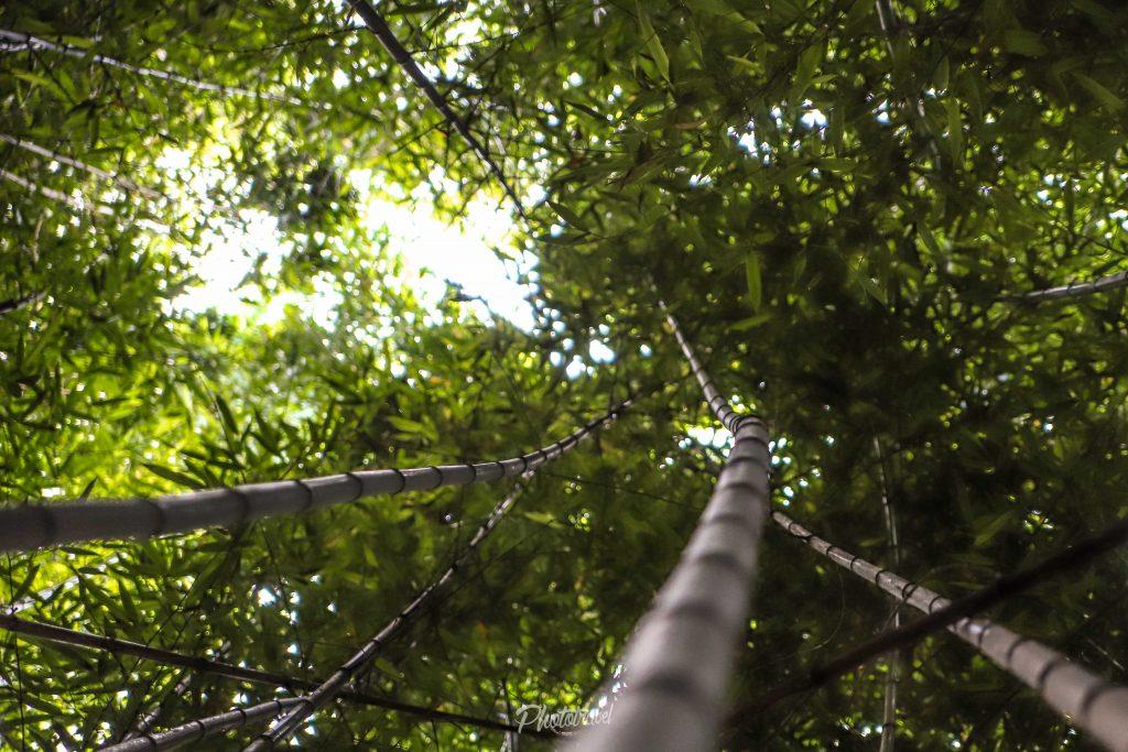 que ver en asturias bosque de bambu