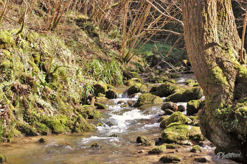 Partes del bosque al que te lleva el camino - Las Xanas - Senderismo