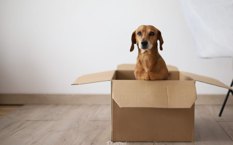 Viajar a Europa con tu mascota