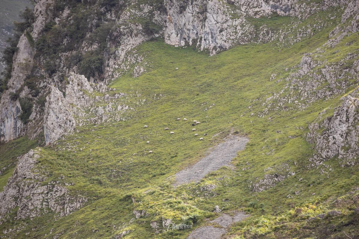 Valle de caldueño, cueva en el oriente asturiano